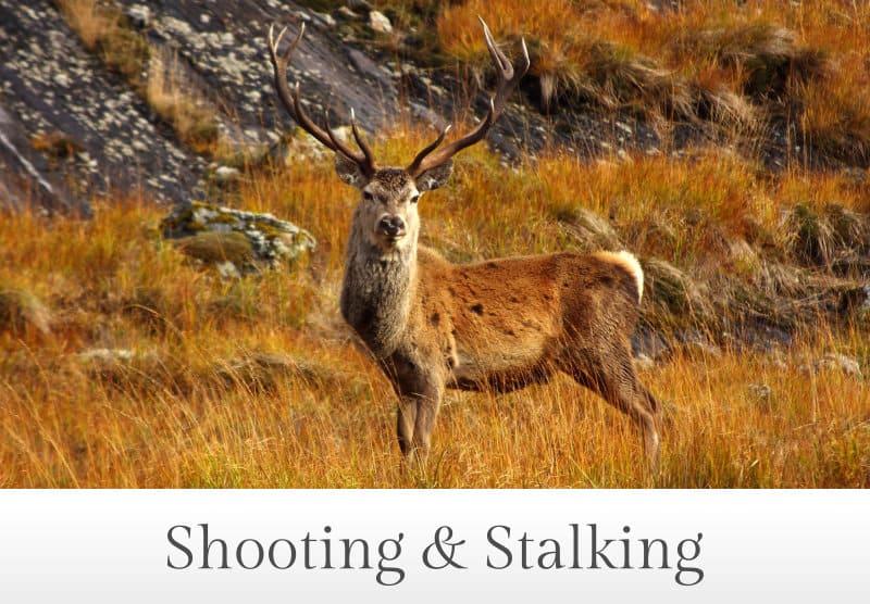 Shooting & Stalking in Perthshire