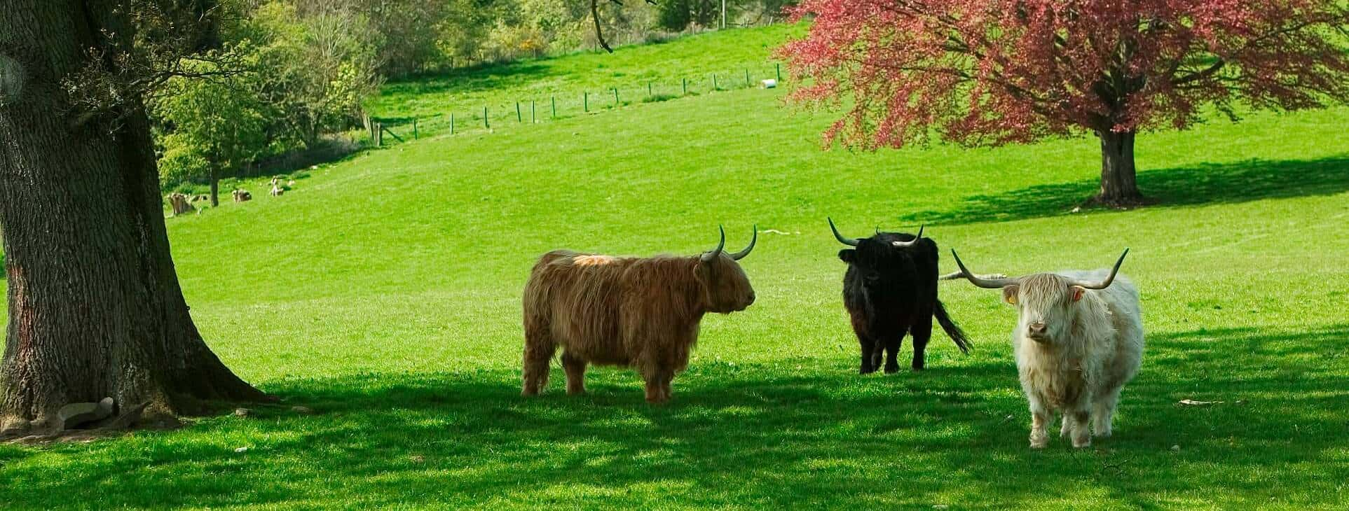 Things to do near Kinloch House